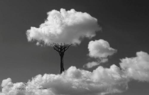 paradis-sous-un-nuage
